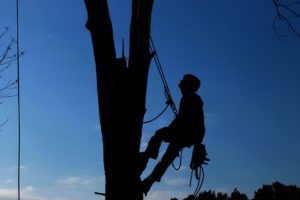 איש קשור לעץ